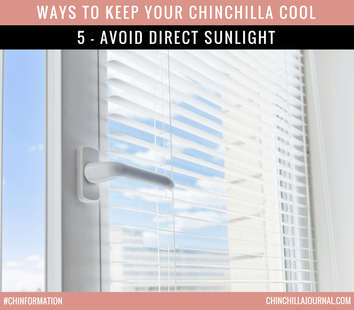 Ways To Keep Your Chinchilla Cool 5 - Avoid Direct Sunlight