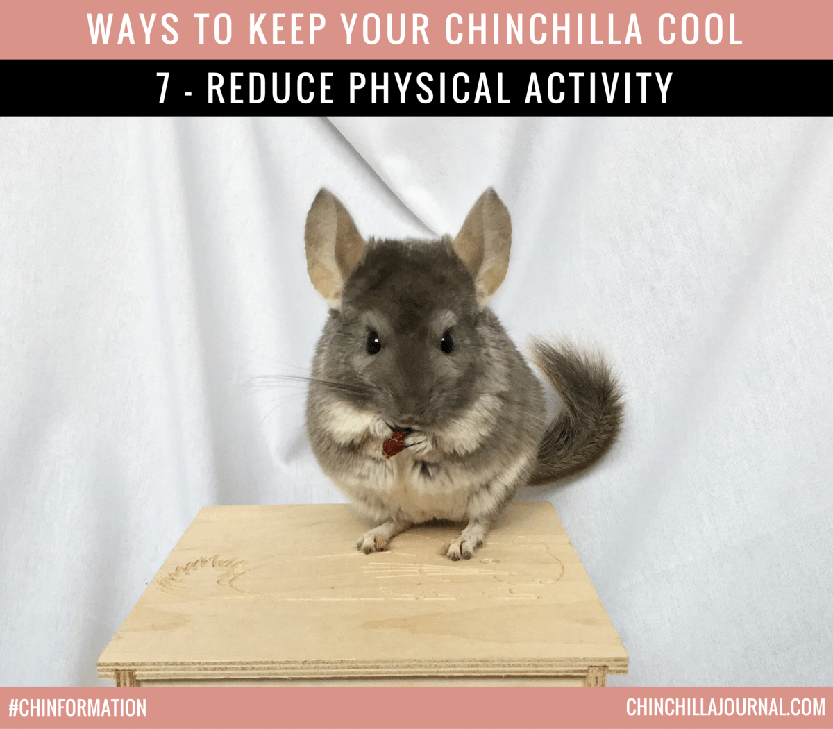 Ways To Keep Your Chinchilla Cool 7 - Reduce Physical Activity