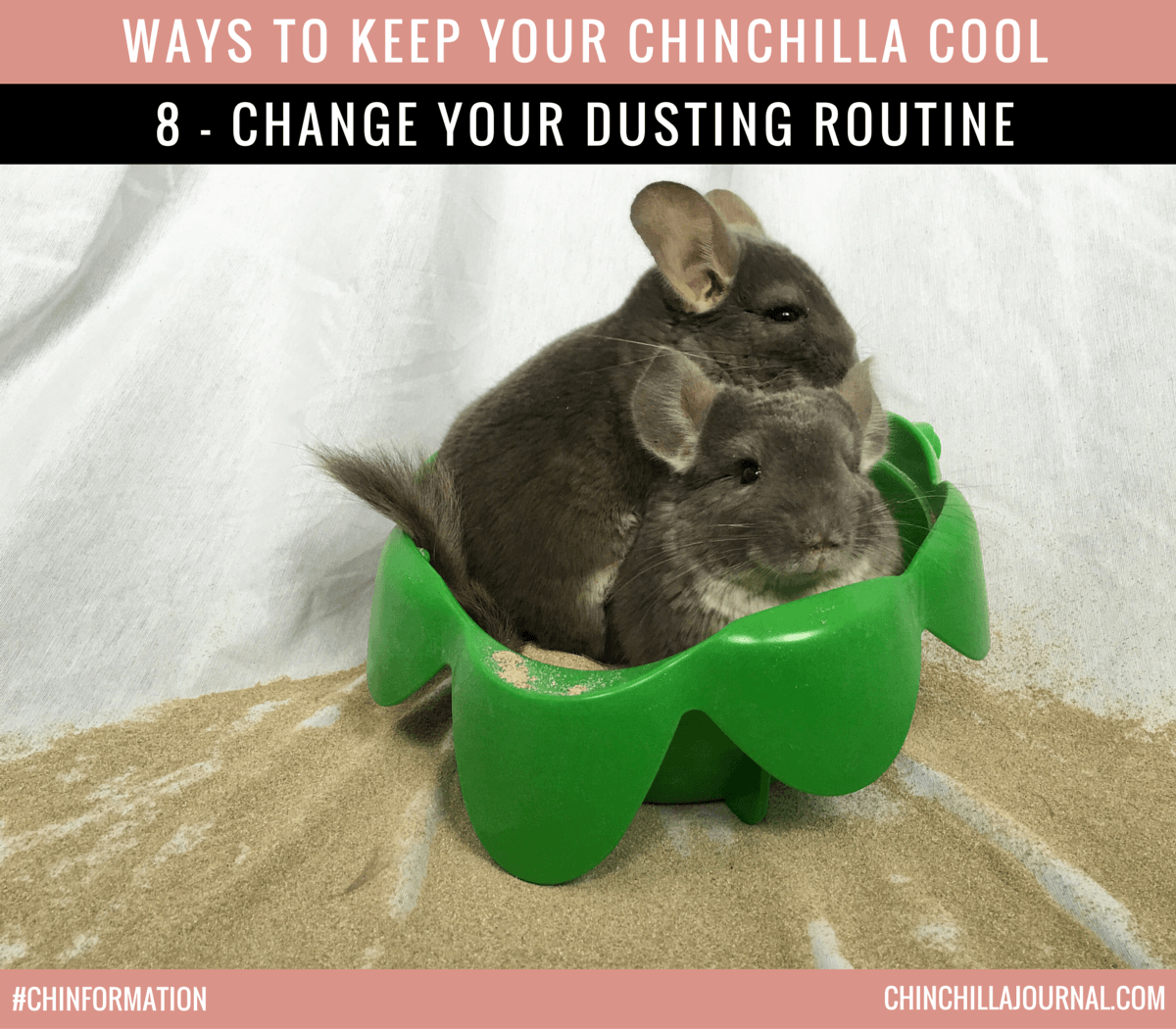 Ways To Keep Your Chinchilla Cool 8 - Change Your Dusting Routine