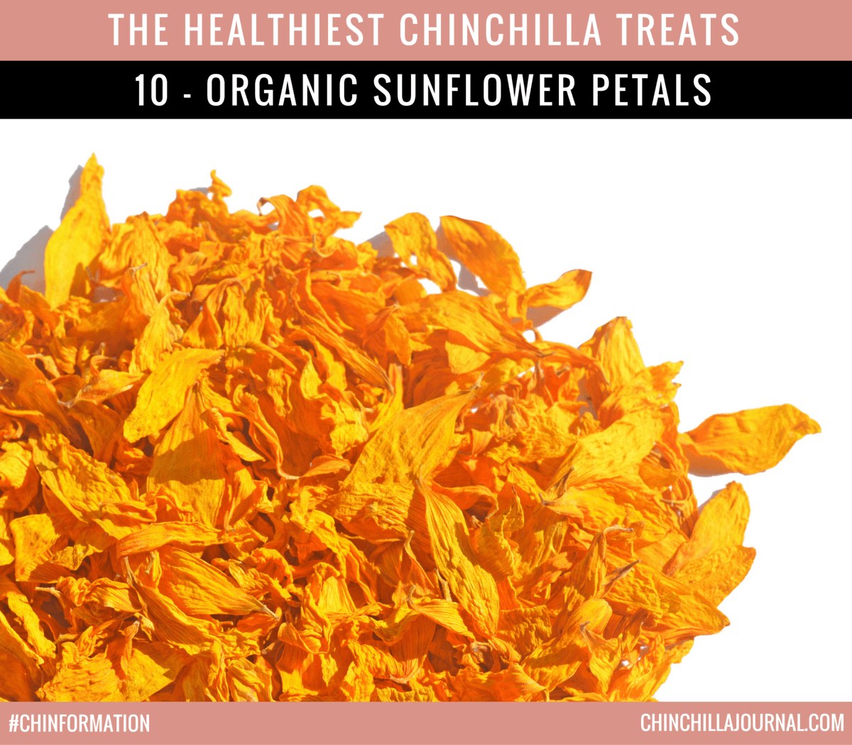 The Healthiest Chinchilla Treats - 10 - Organic Sunflower Petals