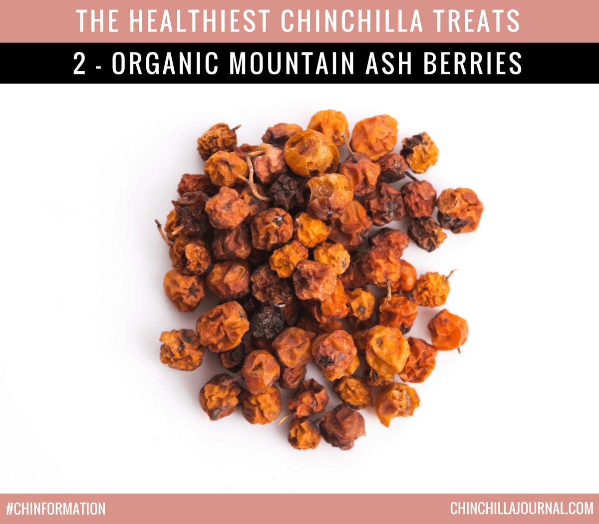 The Healthiest Chinchilla Treats - 2 - Organic Mountain Ash Berries