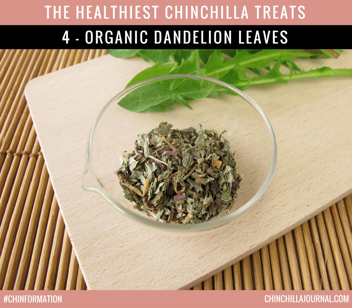 The Healthiest Chinchilla Treats - 4 - Organic Dandelion Leaves