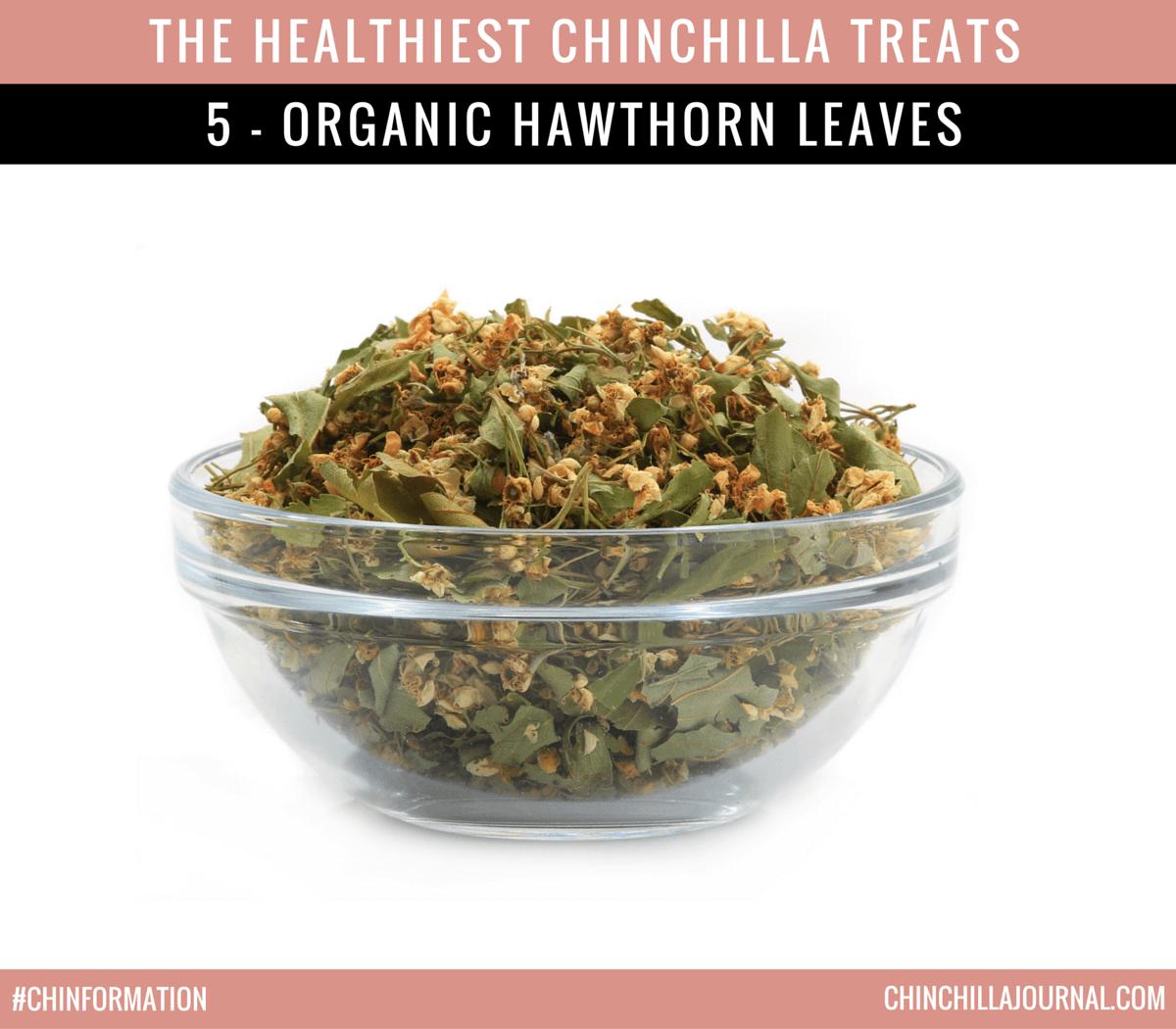The Healthiest Chinchilla Treats - 5 - Organic Hawthorn Leaves