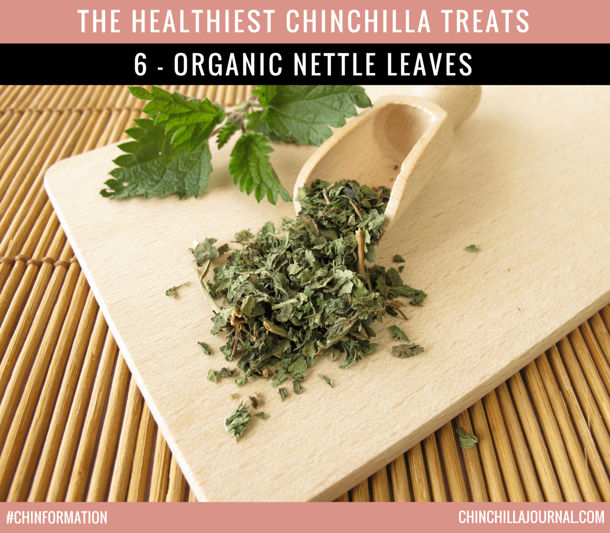 The Healthiest Chinchilla Treats - 6 - Organic Nettle Leaves