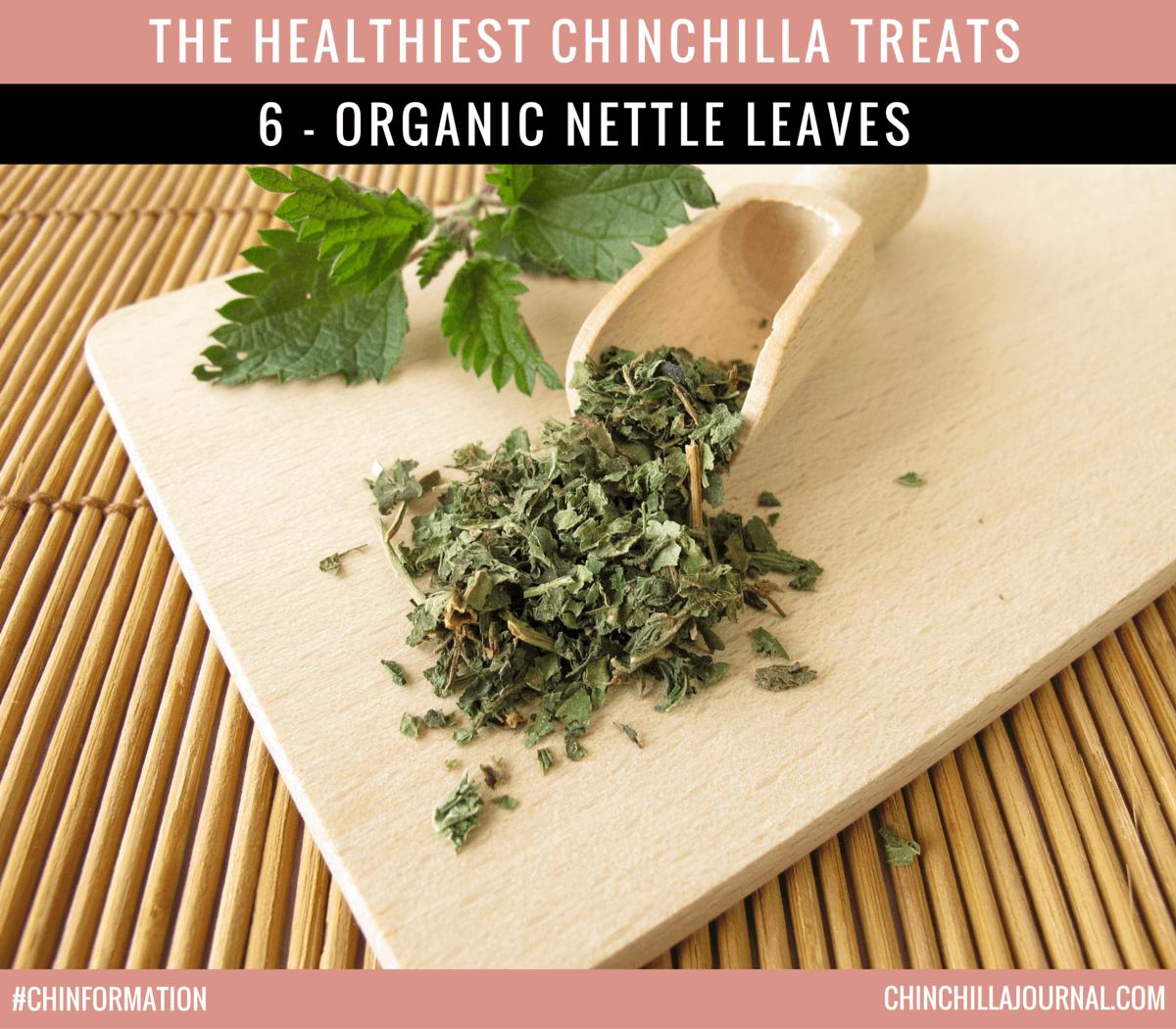 The Healthiest Chinchilla Treats - 6 - Organic Nettle Leaves