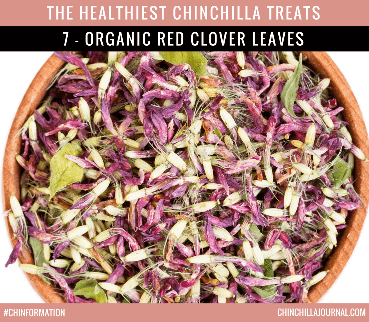 The Healthiest Chinchilla Treats - 7 - Organic Red Clover Leaves