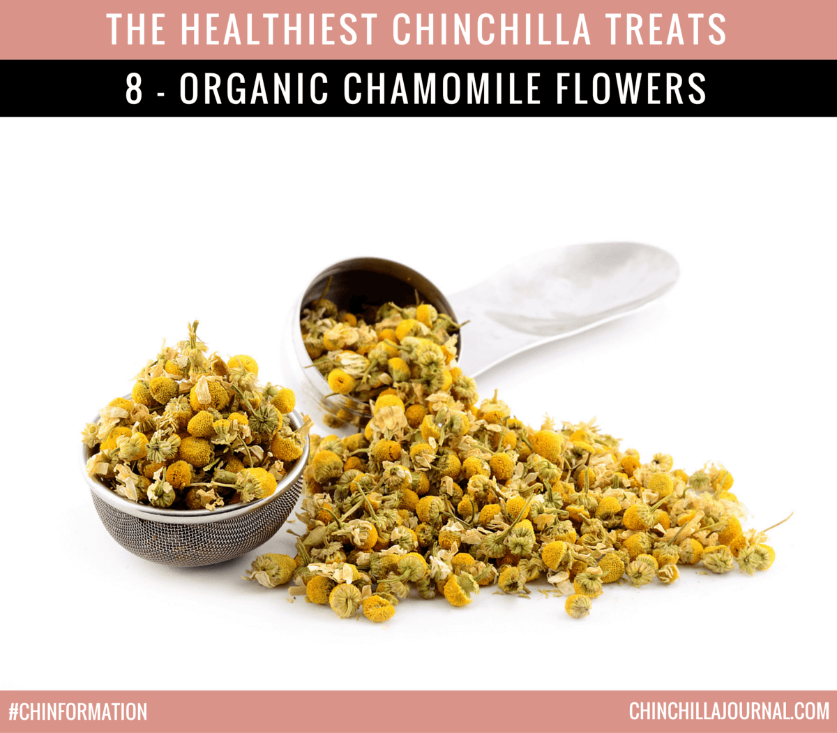 The Healthiest Chinchilla Treats - 8 - Organic Chamomile Flowers