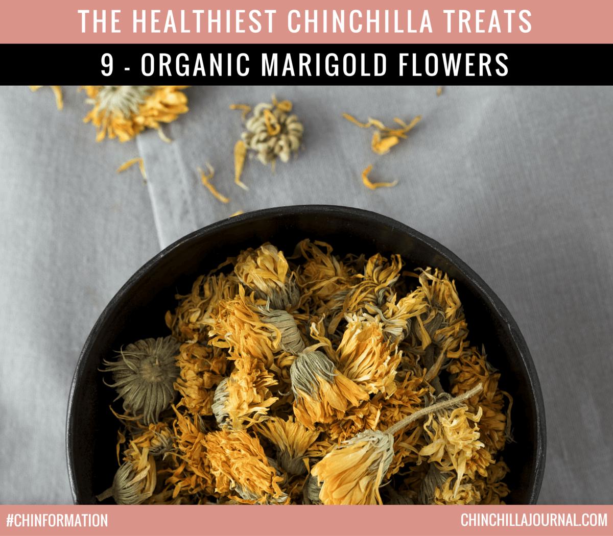 The Healthiest Chinchilla Treats - 9 - Organic Marigold Flowers