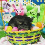 15 Pictures That Prove Chinchillas Are The New Easter Bunny