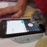 These Chinchillas Will Overwhelm You With Their Cuteness