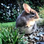 27 Chinchillas Who Are Too Cute To Be Real