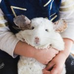These Adorable Chinchillas Will Show You All Is Right With The World